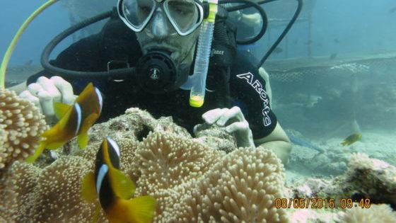 jeddah diving